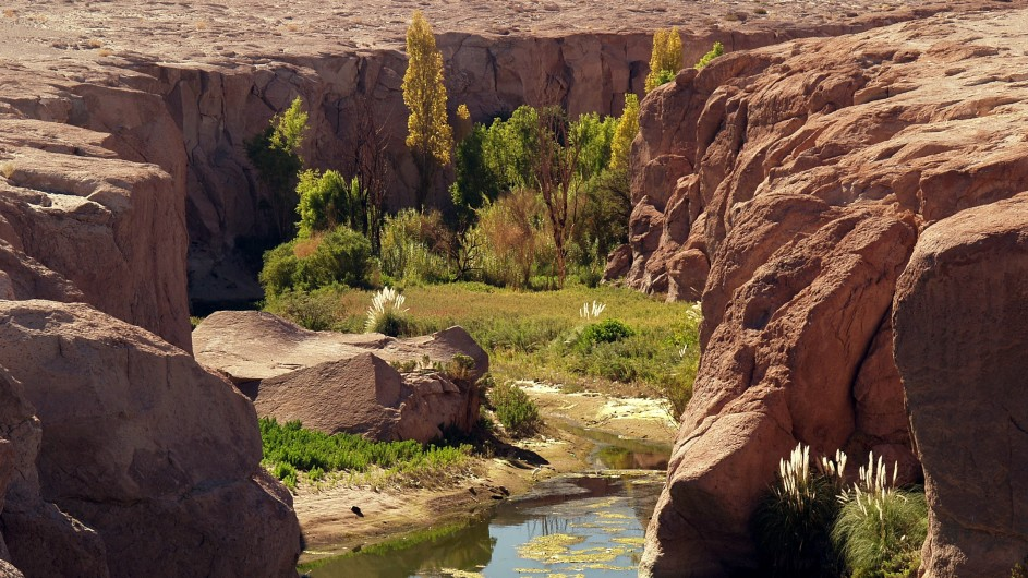 Chile Atacama Wüste Oase Toconao
