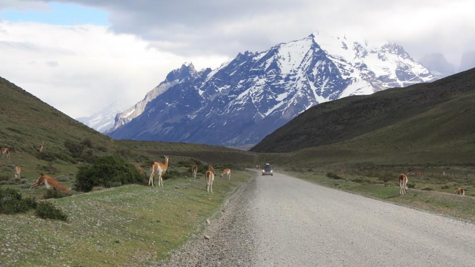 Chile Torres del Paine Straße mit Guanacos