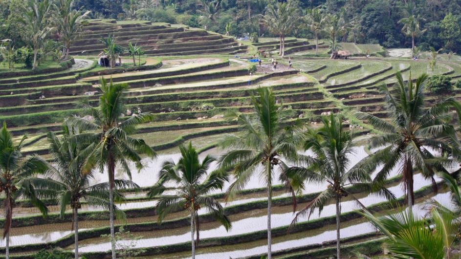 Indonesien Bali Reisterrassen Jataluwih