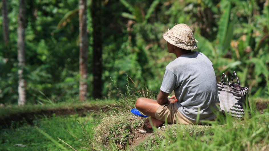 Indonesien - Bali - Reisbauer