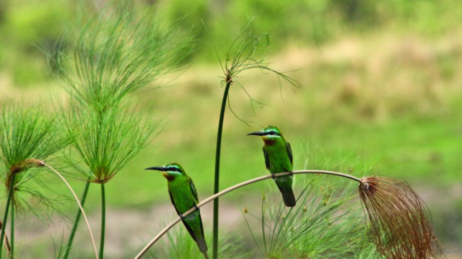 Namibia CAprivi Susuwe Island Lodge Vögel