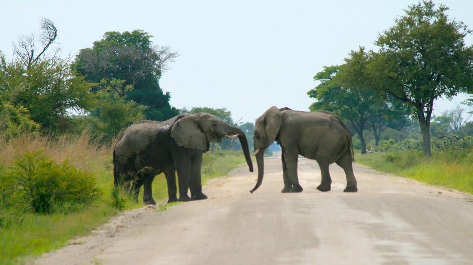 Namibia Elefantenherde im Caprivi