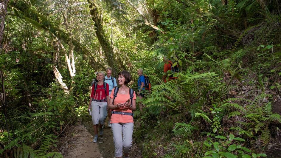 Neuseeland Abel Tasman Nationalpark Regenwaldwanderung