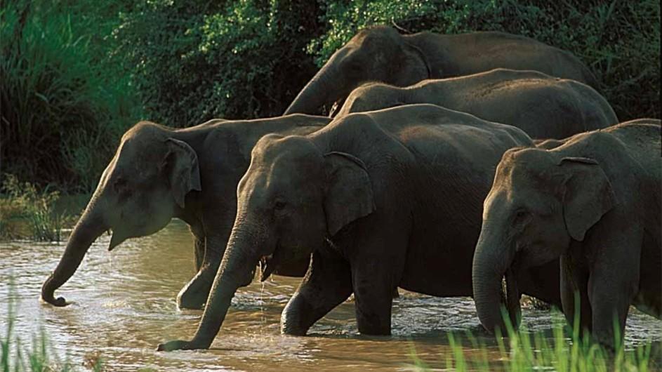 Sri Lanka Elefanten