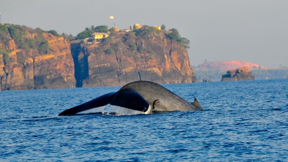 Sri Lanka Walbeobachtung