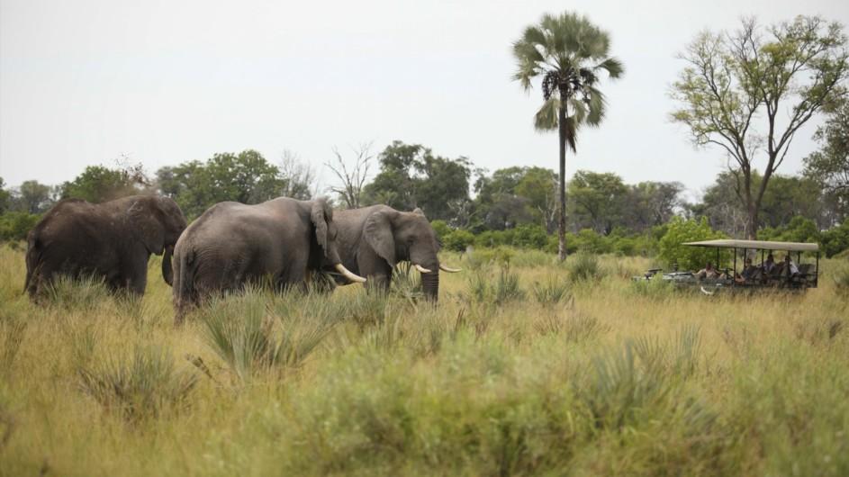 Botswana Okavango Delta Pirschfahrt Elefanten