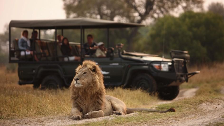 Botswana Okavango Delta Pirschfart Löwe