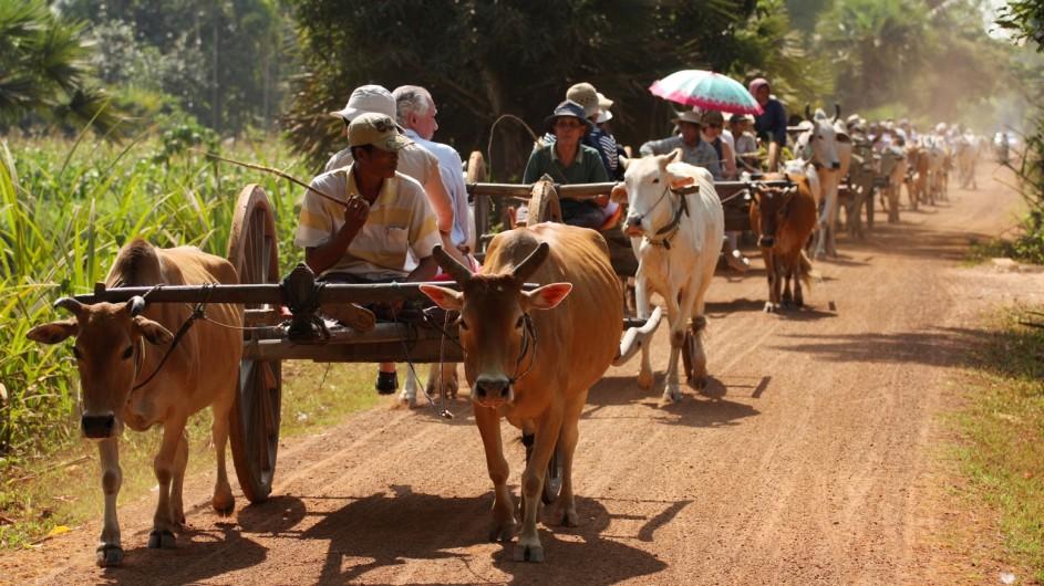 Kambodscha FAhrt mit dem Ochsenkarren