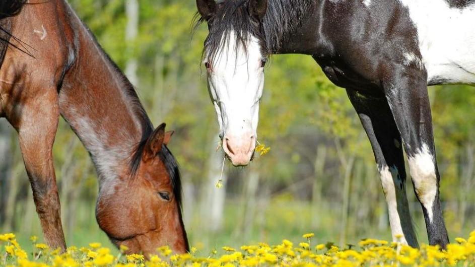 Kanada - Pferde auf der Beaver Guest Ranch