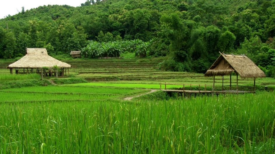 Laos Reisfelder