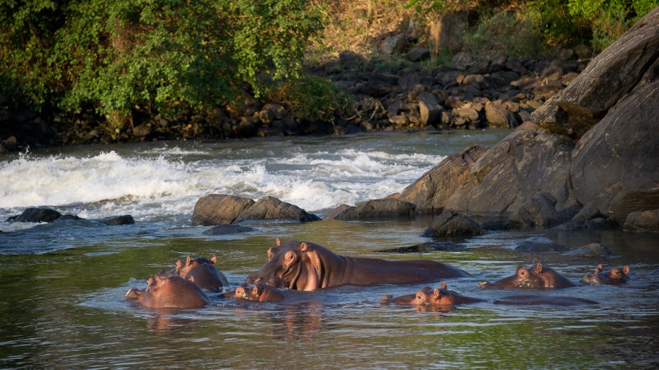 Malawi Mkulumadzi Lodge Nilpferde im Majete Wildreservat