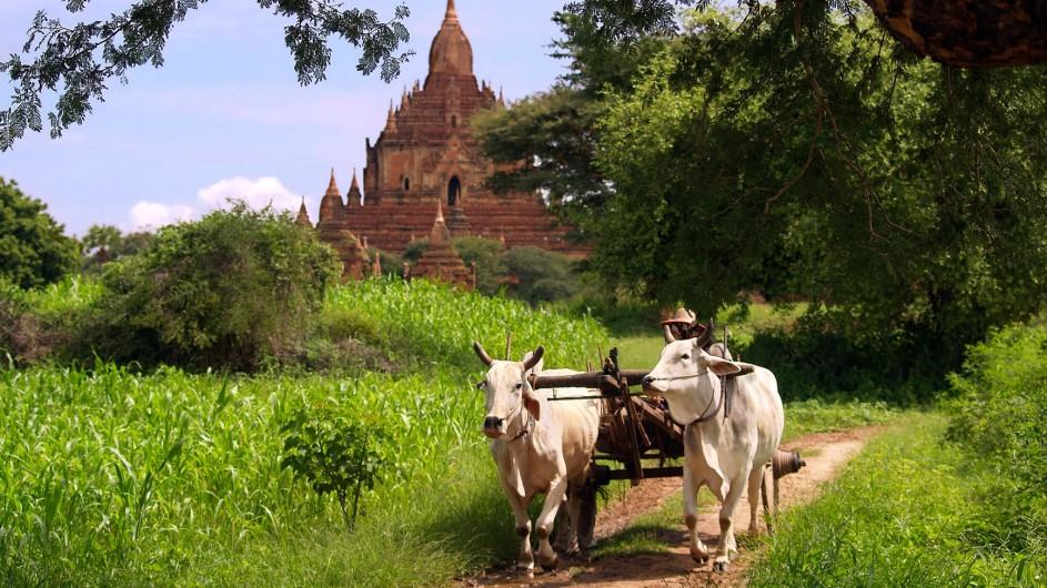 Myanmar im Landlichen Bagan Ochsenkarren