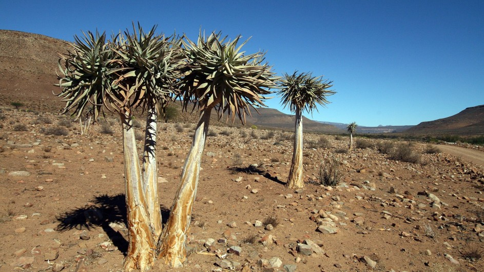 Südafrika Cederberge2