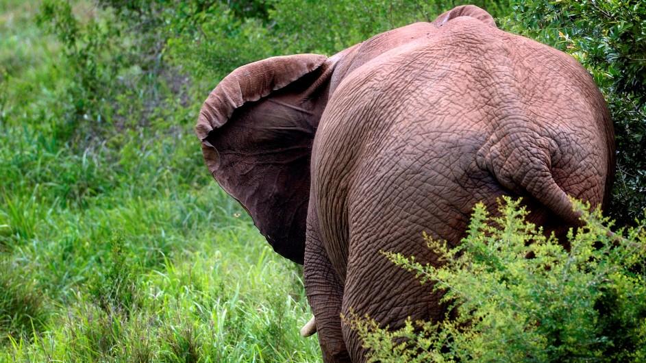 Südafrika Elefant Ulli