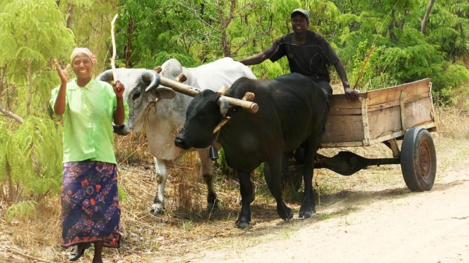 Zambia Ochsenkarren