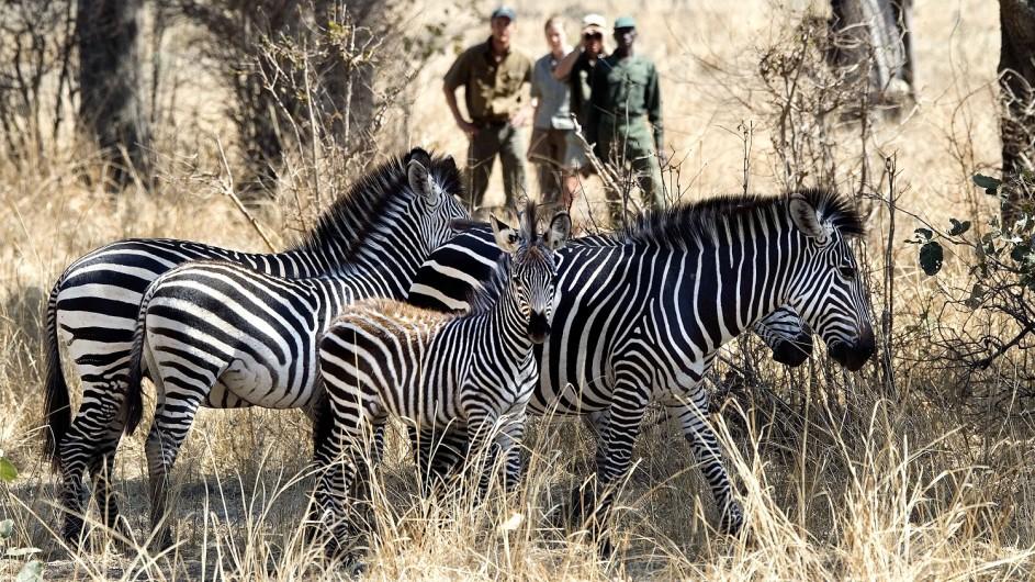 Zambia Fusspirsch