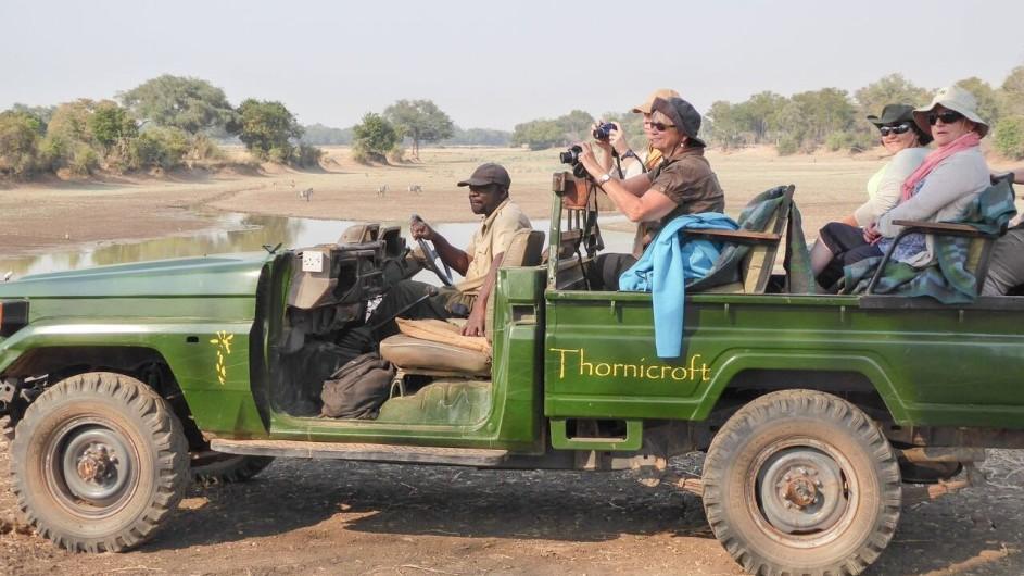 Zambia South Luangwa Nationalpark Thornicorft Safari