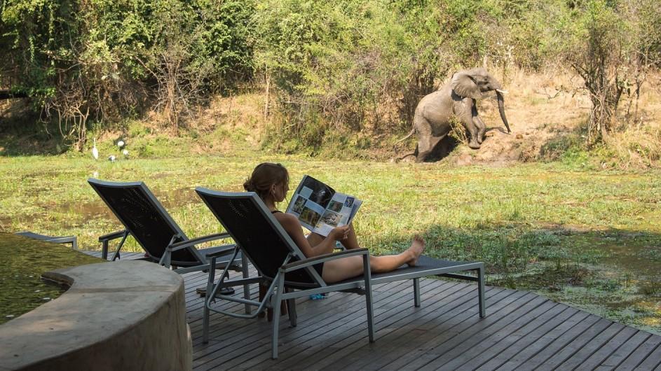 Zambia Nkwali Camp Elefant am Pool