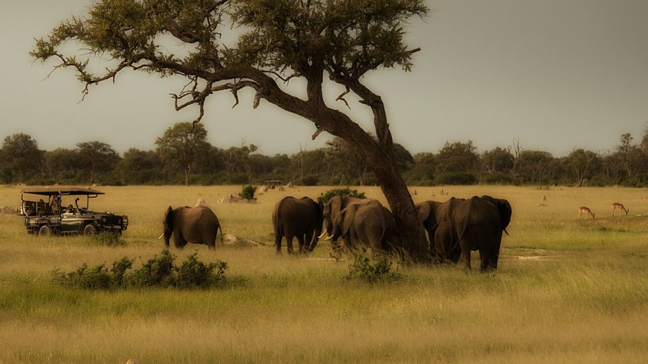 Zimbabwe Somalisa Camp Pirschfahrt