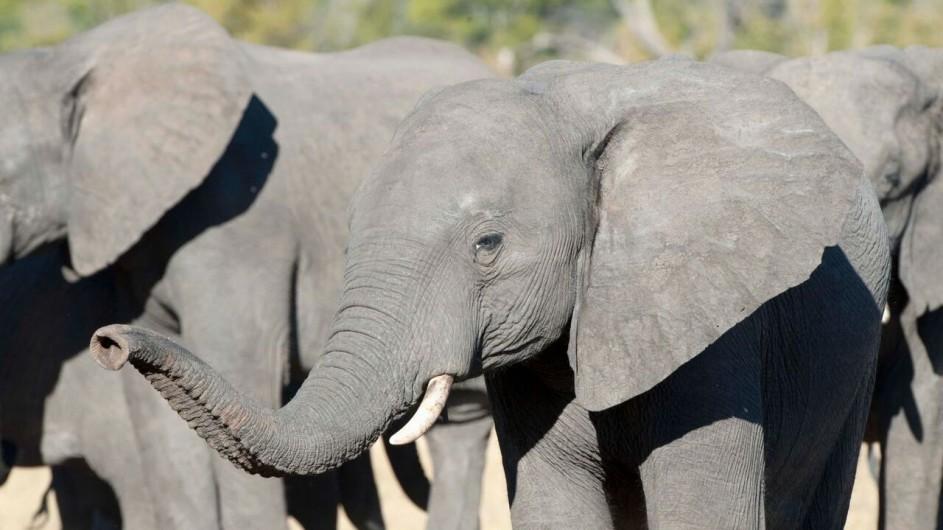 Zimbabwe Hwange Safari Lodge Elefanten