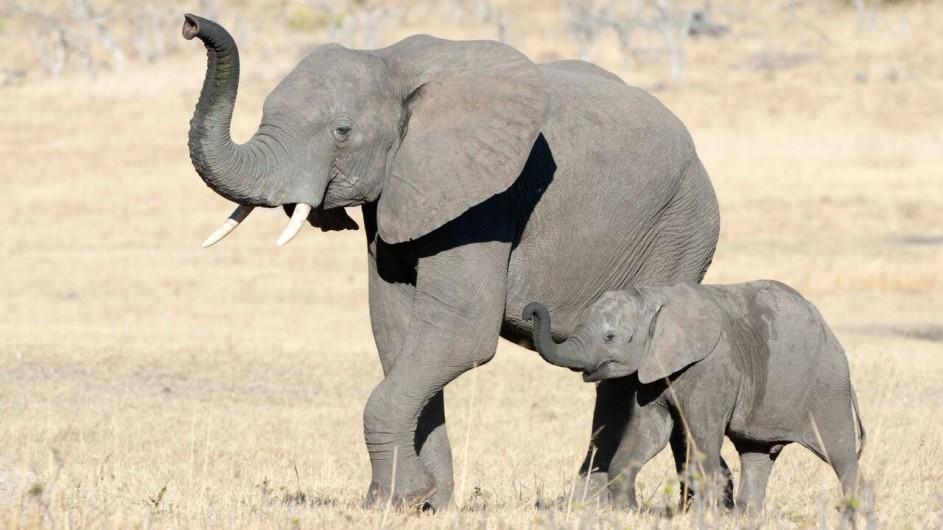 Zimbabwe Hwangwe Safari Lodge Elefanten
