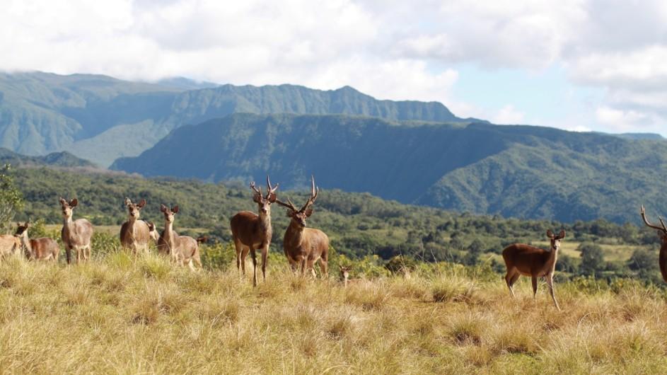 La Reunion Diana Dea Lodge Aussicht mit Wild
