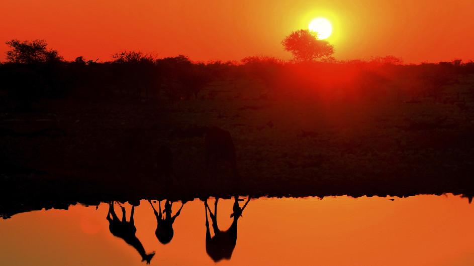 Namibia Giraffen am Wasserloch