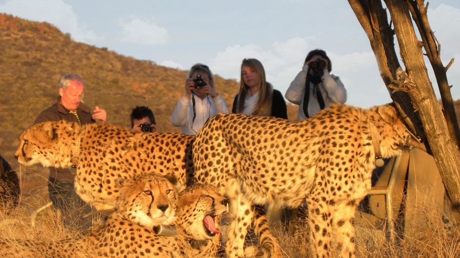 Namibia Gepartenpirsch Okonjima