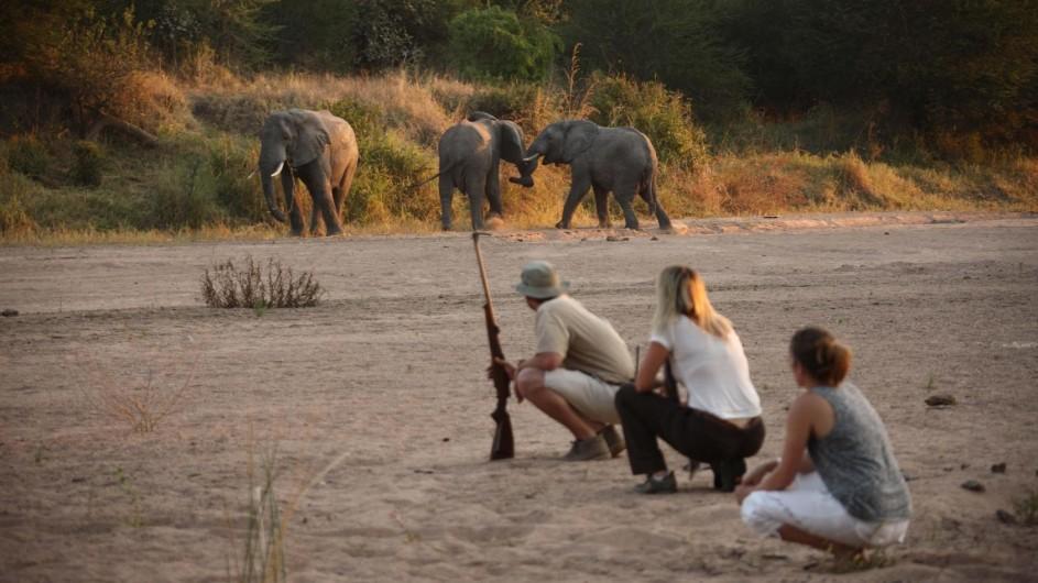 Tanzania Ruaha Nationalpark Jongomero Camp Fußpirsch