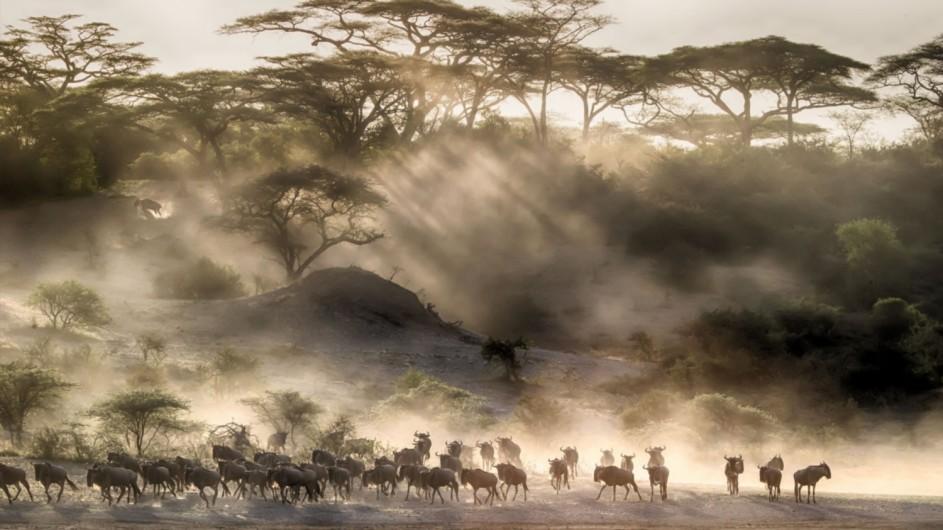 Tanzania Serengeti Kleins Camp Mirgation