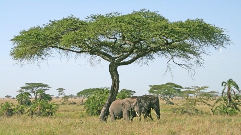 Tanzania Elefanten