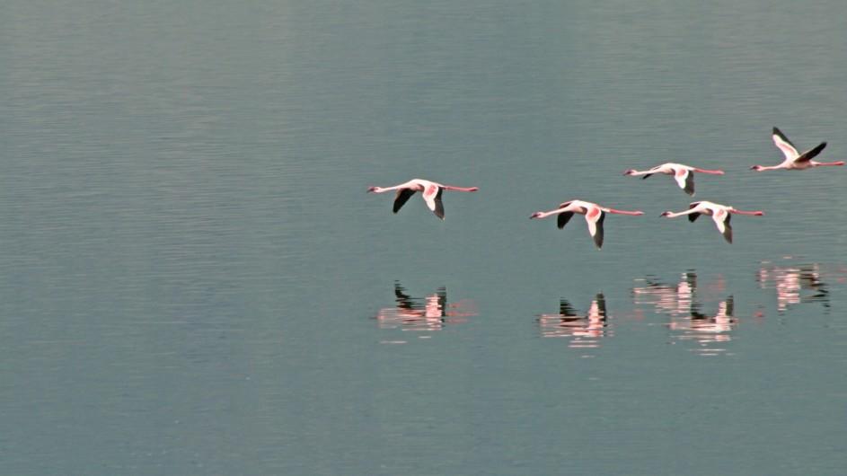 Tanzania Experience Flamingos