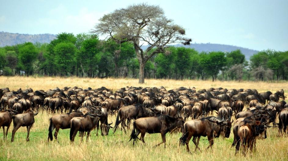 Tanzania Experience Miragtion Serengeti