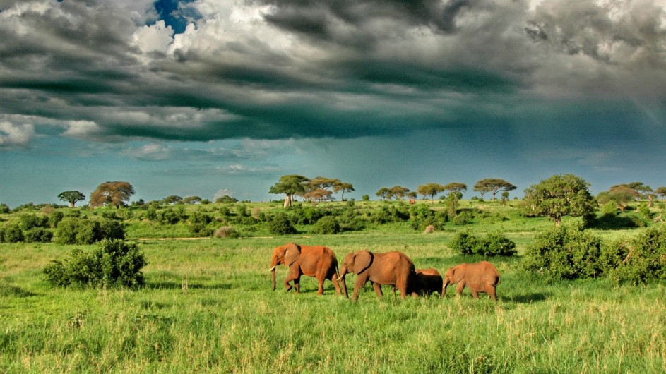 Tanzania Tarangiere Nationalpark Asilia Lodges Elefanten