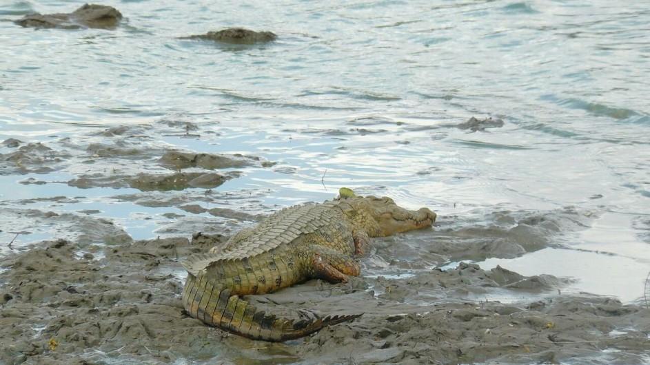 Tanzania Ruaha Nationalpark Krokodil