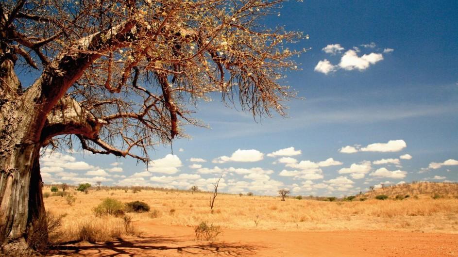Tanzania Ruaha Nationalpark