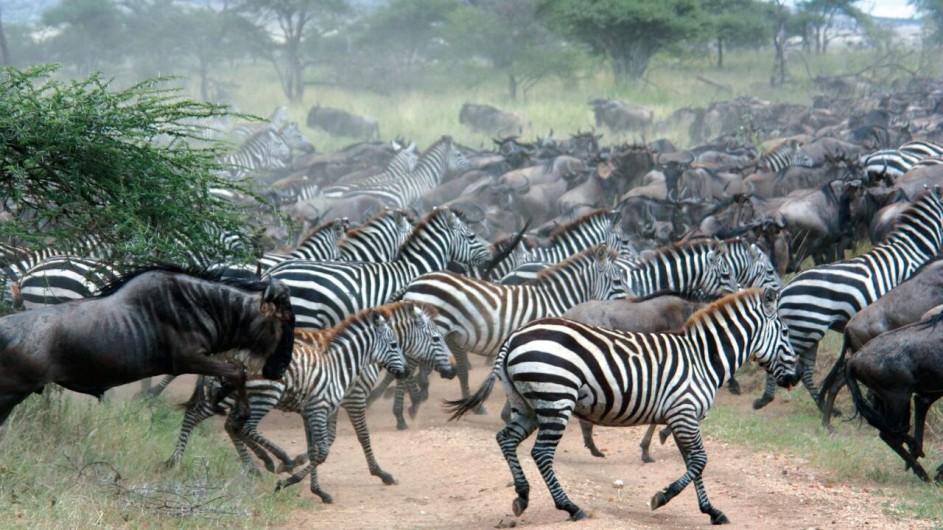 Tanzania Serengeti Mirgation
