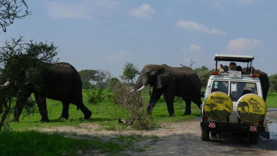 Tanzania Tarangiere Nationalpark Pirschfahrt