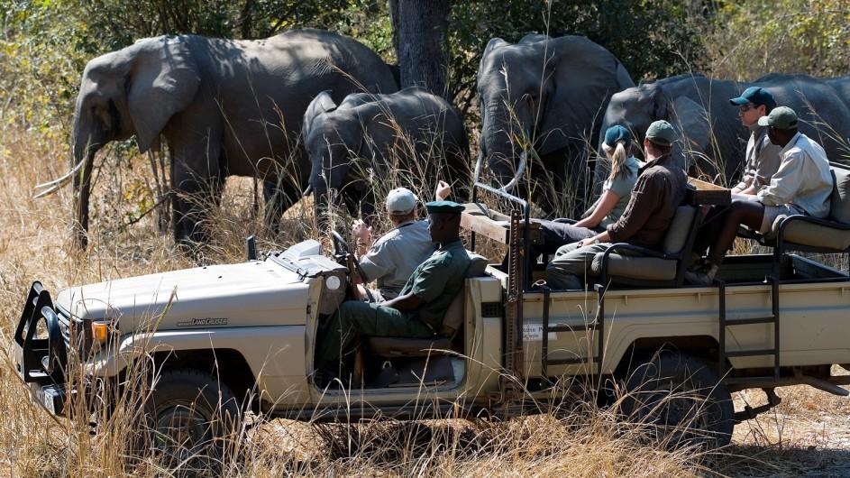 Zambia Nkwali Pirschfahrt mit Elefanten