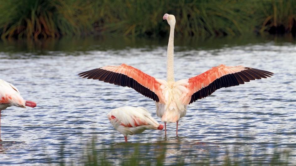 Tanzania Flamingos im Arusha Nationalpark
