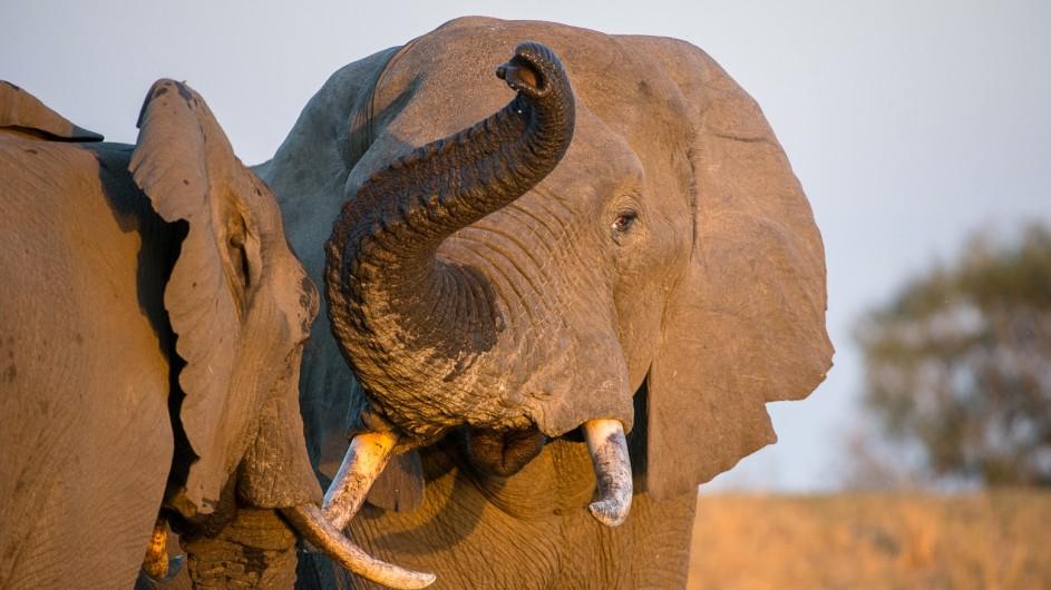 Südafrika Krüger Nationalpark Elefanten