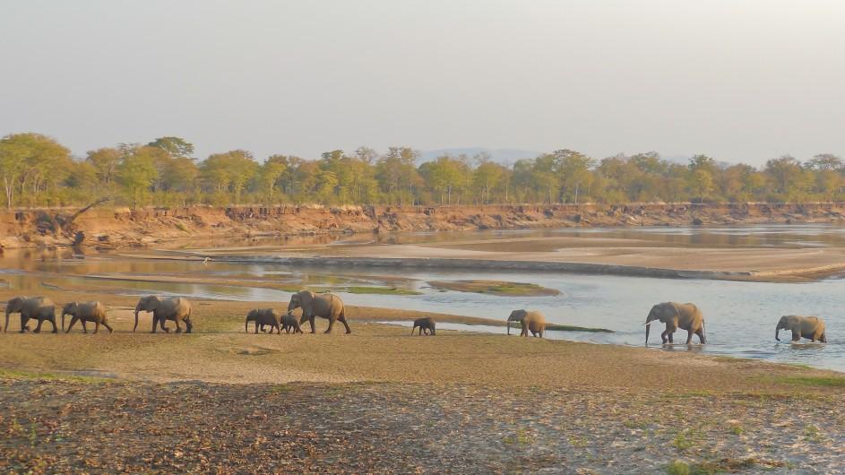 Zanbua South Luangwa Nationalpark Elefanten