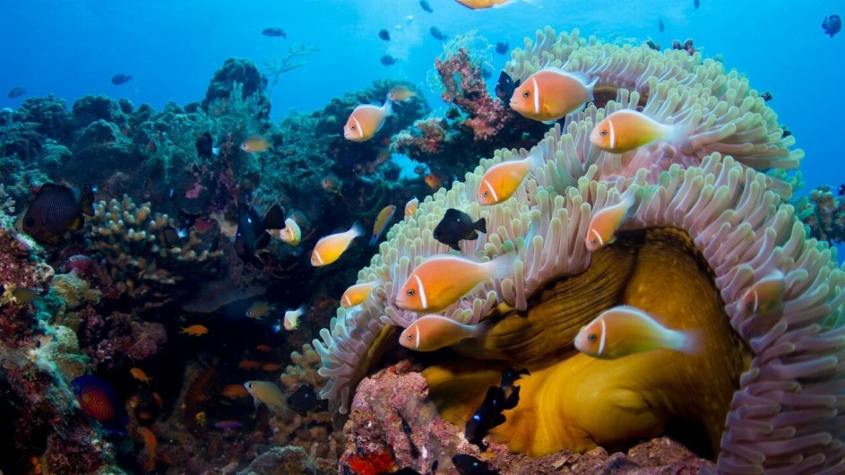 Lalati Resort Beqa Island Fiji