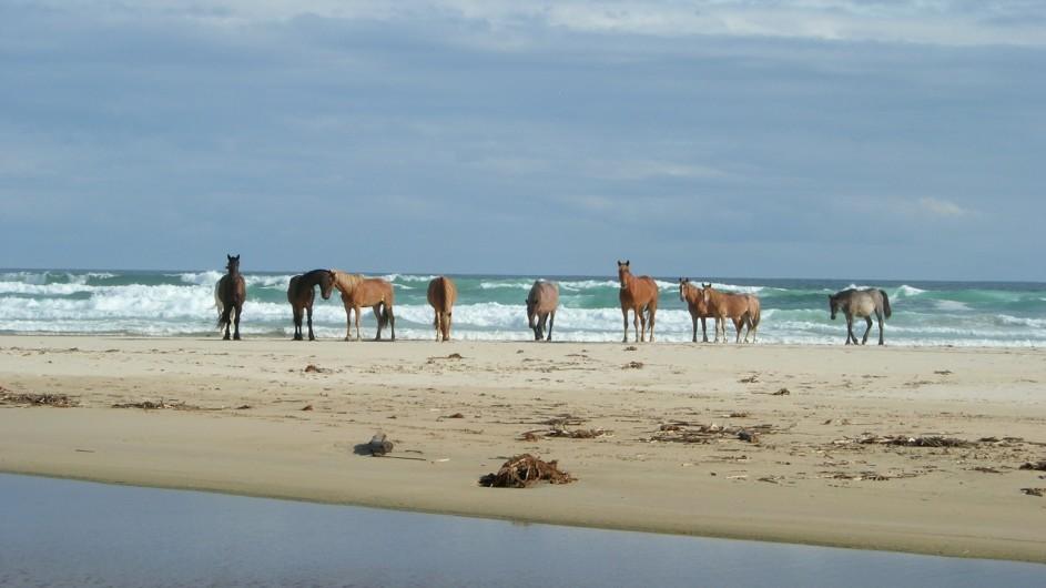 Südafrika Oyster Bay Lodge Pferde am Strand