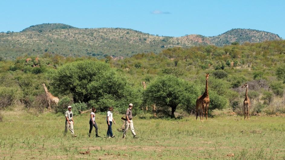 Südafrika Madikwe Safari Lodge Bush Walk