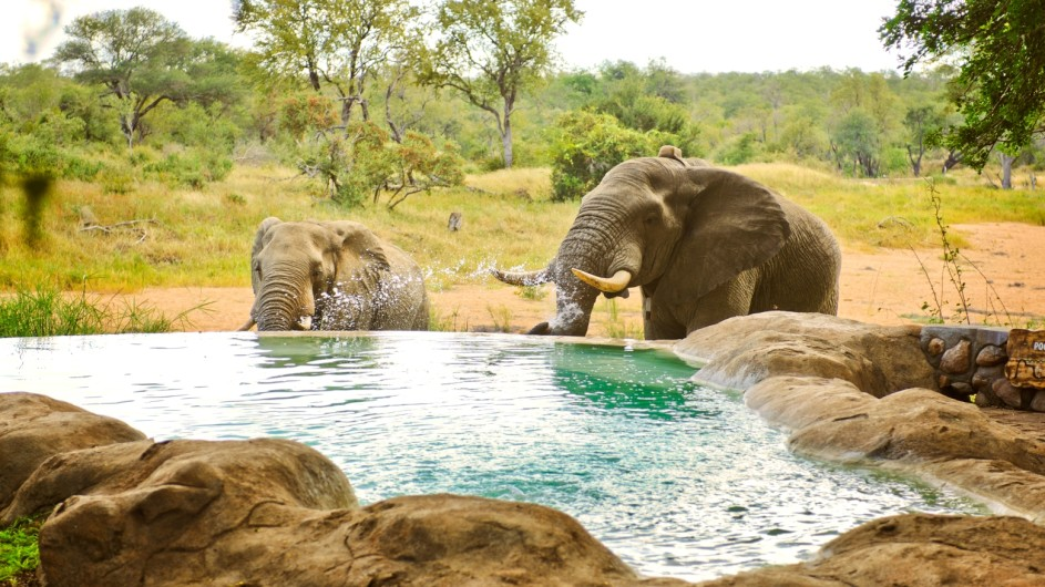 Südafrika Motswari Private Game Reserve Pool mit Elefanten
