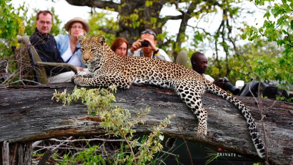 Südafrika Motswari Private Game Reserve Pirschfahrt Leopard
