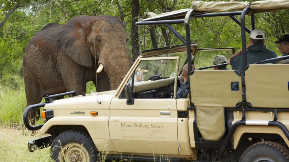 Südafrika Krüger Nationalpark Plains Camp Pirschfahrt