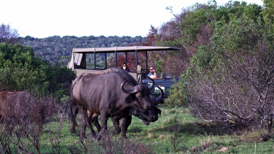 Südafrika Sibuya Game Reserve Pirschfahrt