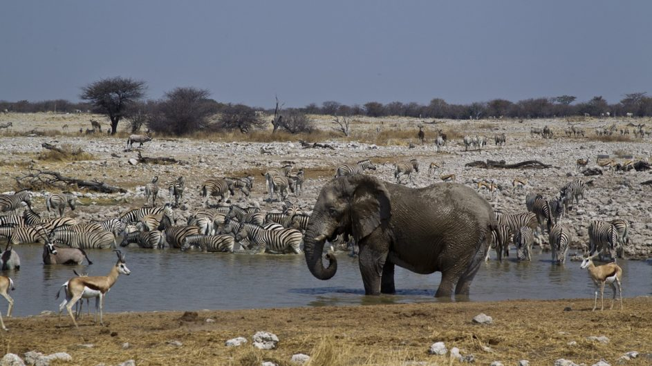 Namibia Etosha Nationalpar Anderssons Camp Ansicht Wasserloch